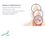 Hormonsystem II - rissip Onlinekurs - Ischler Institut