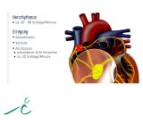 Das Herz  - rissip Onlinekurs - Ischler Institut