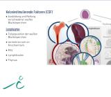 Das Blut - rissip Onlinekurs - Ischler Institut