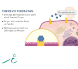 Hormonsystem I - rissip Onlinekurs - Ischler Institut